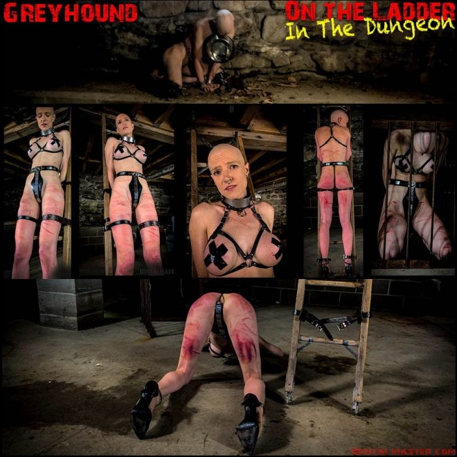 Brutal Master - Greyhound – On The Ladder In The Dungeon (2019/FullHD/2.61 GB)